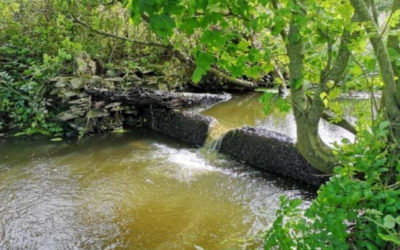 Afon Wygyr Water Quality and Habitat Improvement Project Final Report January 2020